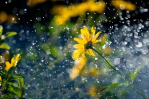 """Синоптики дали """"мокрий"""" прогноз до вихідних"""