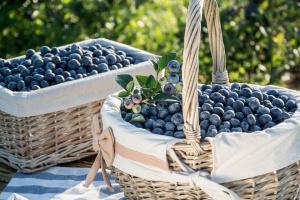 Мясо, молоко, зерно и ягоды: Украина увеличила экспорт агропродукции