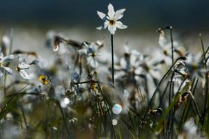 """Весна """"попрощается"""" грозами и 30-градусной жарой"""