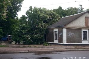 На Житомирщині негода повалила дерева та затопила вулиці