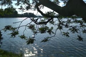 Перегони на каное й водні дослідження: у Франківську влаштують незвичний фестиваль