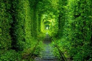 «Тоннель любви» на Ривненщине открывает новый туристический сезон