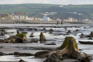 В Уельсі ураган підняв з моря доісторичний ліс