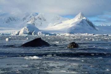 Sinkevicius y Abramovsky discuten el patrocinio de dos áreas protegidas en la Antártida