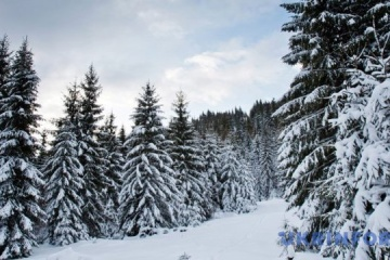 Cae la nieve en los Cárpatos (Vídeo)