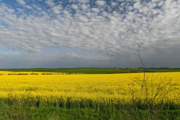 In der Ukraine fast 40 Prozent geplanter Flächen mit Sommerkulturen besät