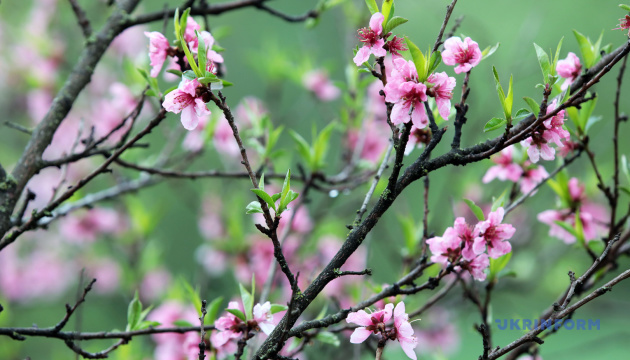 Ce vendredi 20 mars marque le premier jour du printemps