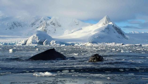 Рекордное потепление в Антарктиде - температура поднялась до 20° тепла