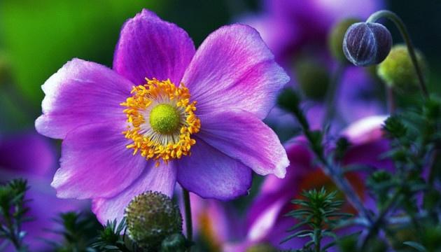 6 травня: народний календар і астровісник