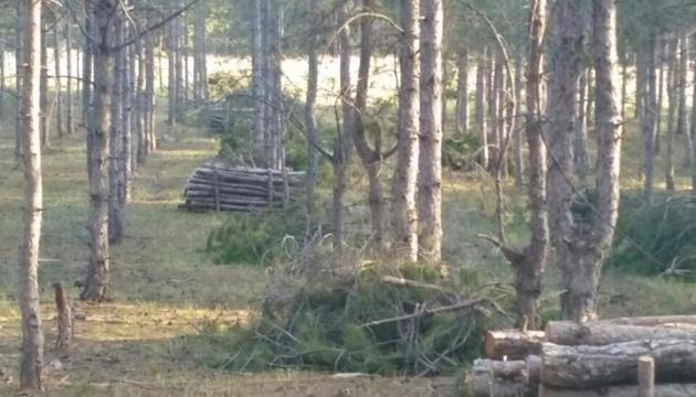 Ліс на Херсонщині не вирубували, а проріджували - поліція
