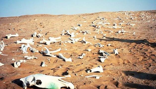 Вымирание угрожает миллиону видов животных и растений на Земле - ООН
