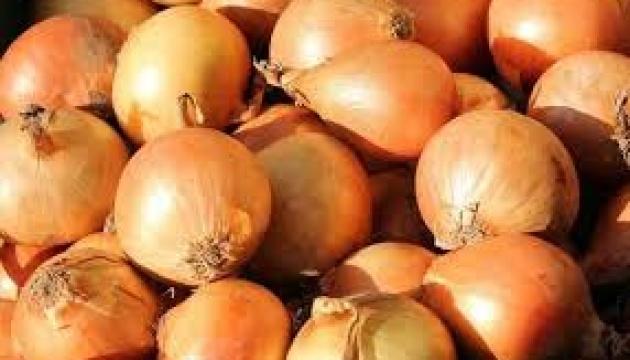 Ucrania aumenta significativamente las exportaciones de cebollas