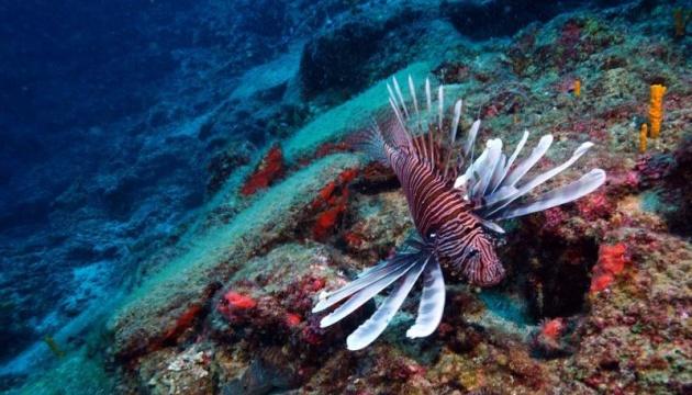 Біля берегів Туреччини знайшли корабель, який затонув у 1600 році до н.е.