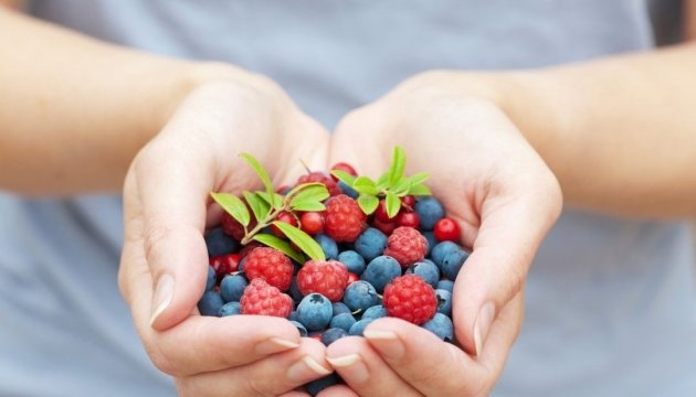 Netherlands, Britain and Poland among largest importers of Ukrainian berries