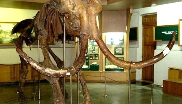 У Житомирі в День музеїв розкажуть про таємниці місцевих мамонтів