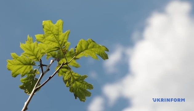 На Алеї українських діаспор висадили перші дерева