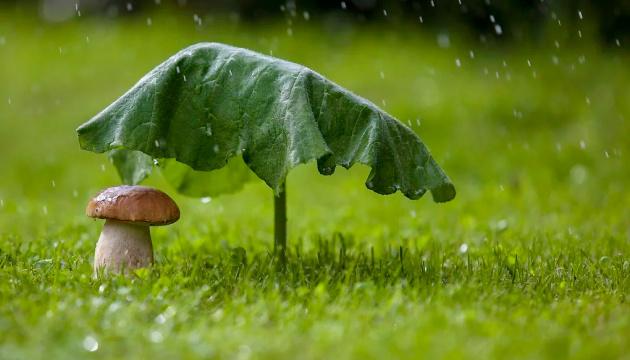 Кінець тижня знов принесе дощі та грози, але подекуди буде до +32°