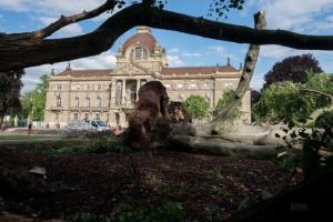 У центрі Страсбурга буревій повалив столітні буки