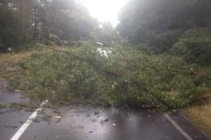 На Чернігівщині буревій повалив дерева
