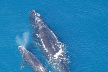 19 février : La journée internationale de la baleine