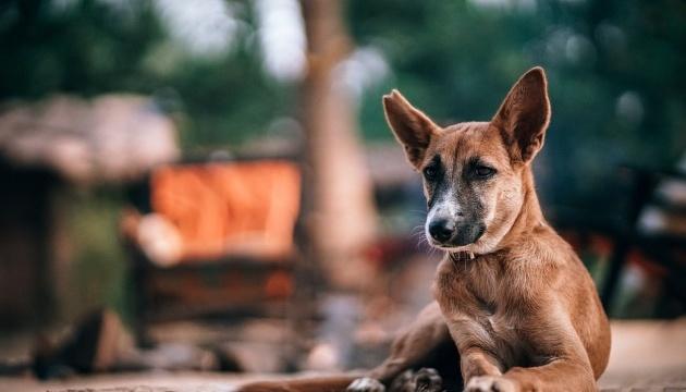 Літак з Туреччини не міг сісти в Чернівцях через бездомного пса
