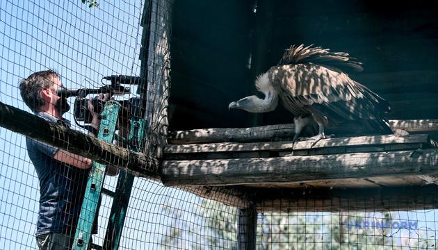 В Бердянском зоопарке родился редкий птенец белоголового сипа