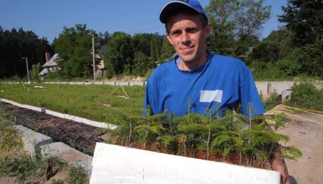 Мінприроди відновлює червонокнижні рослини та дерева у Карпатах — Семерак