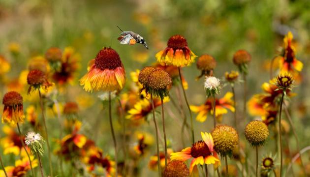 Серпневі гойдалки: удень на літо, вночі - на осінь