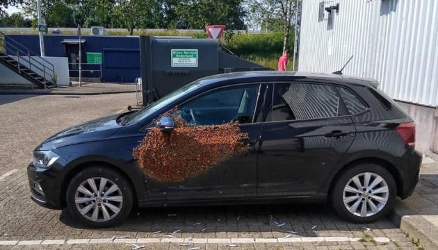 У Нідерландах бджоли заблокували автомобіль