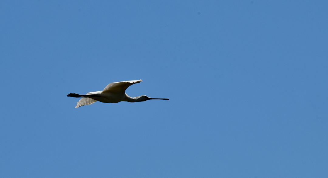 фото-Харчиков-птах