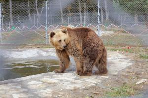 Медвежий приют «Домажир» открыл туристический сезон