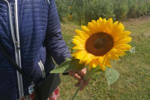 Трагедия МН17: в Нидерландах чтят память погибших