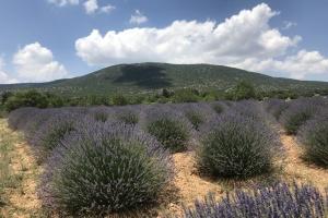 Лавандовий рай на заході Туреччини