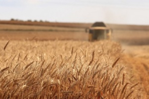 Ukraine exports almost $2 bln worth of agricultural products in January