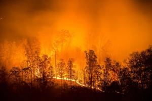 """Лісові пожежі у США: сім штатів оголосили """"червоний"""" рівень небезпеки"""