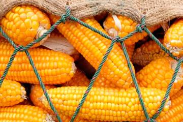 ウクライナの農産品、輸出上位5か国は中国、印、エジプト、トルコ、蘭=農業政策・食料省