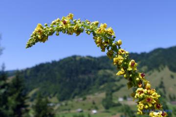 Неделя в Украине начнется с жары