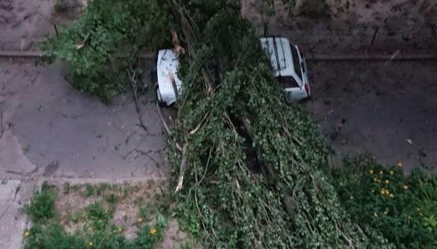 Шквальний вітер у Чернігові повалив дерева