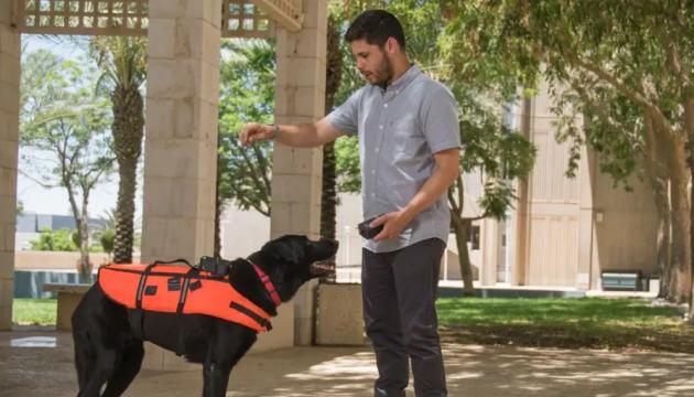 Для общения с собаками разработали