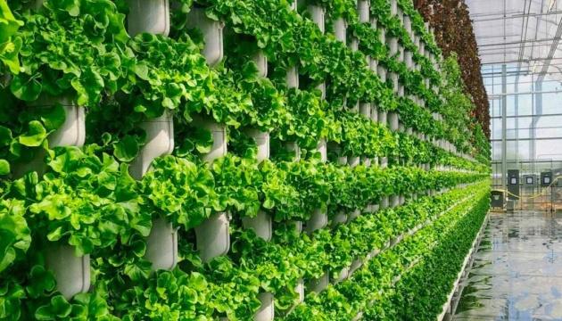 У передмісті Сан-Франциско створили вертикальну ферму