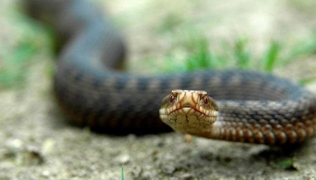 Медики пояснили, що робити при укусі змії