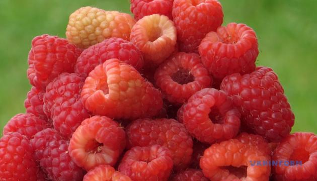 Гостей феста на Житомирщине будут угощать блюдами из малины
