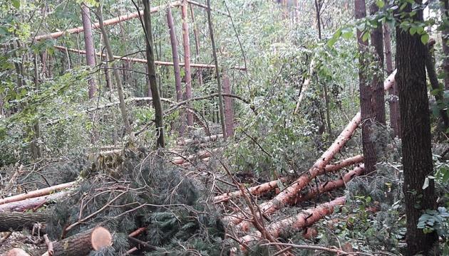 На Чернігівщини буревій повалив понад 160 гектарів лісу