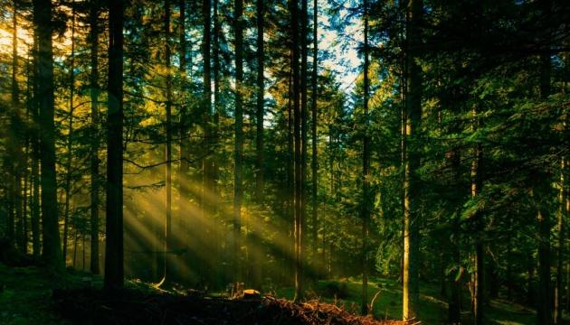 Рада заборонила вирубку лісу на схилах Карпат