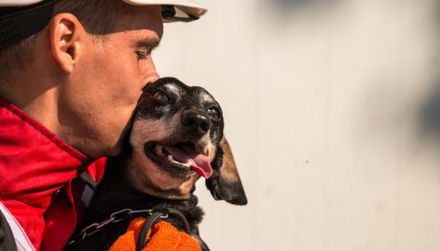 Українські собаки-рятувальники увійшли до сотні найкращих у світі
