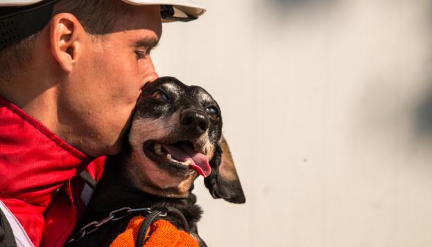 Ukrainische Hunderetter unter den Top hundert weltweit - Foto