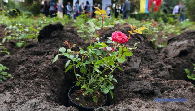 У столичному ботсаду висадили 251 троянду в пам'ять про загиблих від путчу в Туреччині
