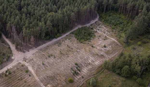 На Закарпатті СБУ викрила схему контрабандного вивезення лісопродукції за кордон
