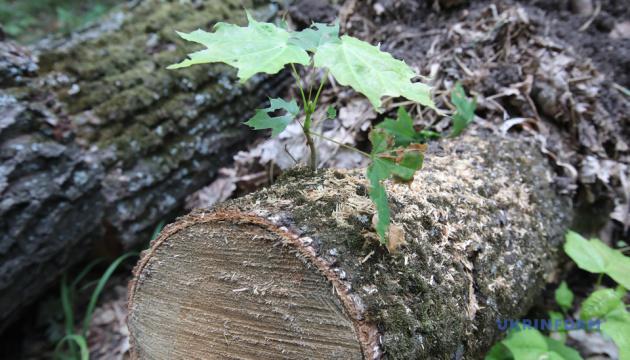 На Харківщині не зафіксували нових незаконних вирубок лісу