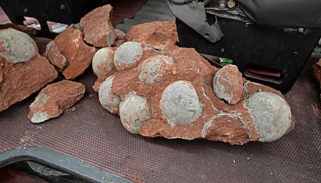 В Китаї хлопчик знайшов яйця динозавра віком 66 мільйонів років